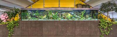 Aquarienservice Aquarienreinigung Aquarienpflege - Aqua-Andy -