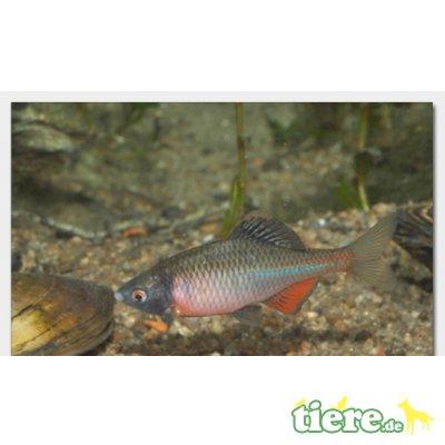 Gartenteich Zubehör // Fa.Fördefisch