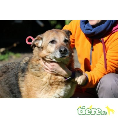 Ajo, ...unser Traumhund - Rüde