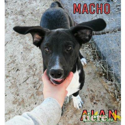 Alan, Mischling - Rüde