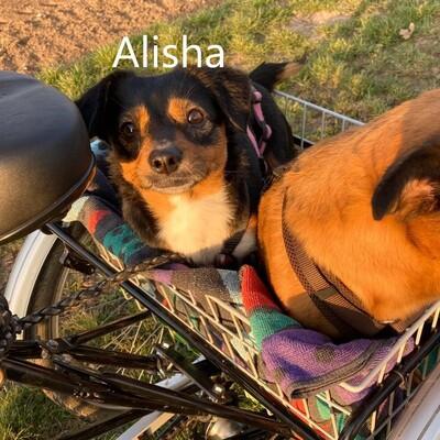 Alisha, mix - Hündin
