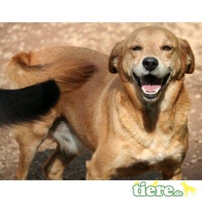 Biko, : mit dem zauberhaften Lächeln - Rüde 1