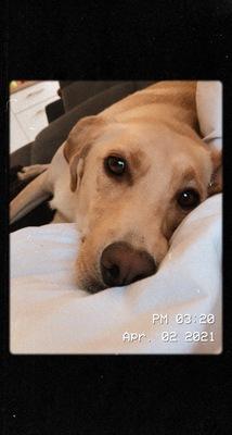Bobby, Labrador und unbekannt - Rüde 1