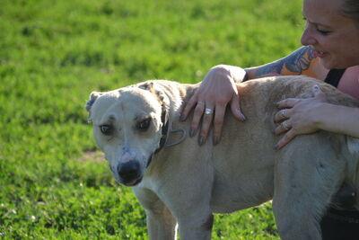 Djulio verzaubert mit seinem lächeln!, Staffordshire Terrier mit Windhund? - Rüde 1