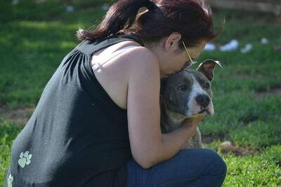 Gina sucht ihr erstes eigenes Zuhause!, Staffordshire Terrier Mix - Hündin
