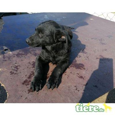 Gloria, aufgewecktes Hundemädchen, Mischling - Hündin