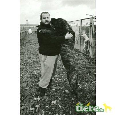 Hunde Gutachter für Berlin und Brandenburg