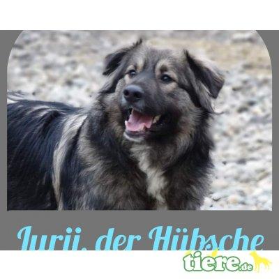 Jurij, Mischling - Rüde