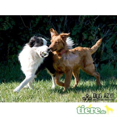 Kevin, Liebenswerter Mischlingshund - Rüde