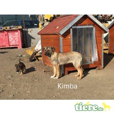 Kimba, m - Hündin