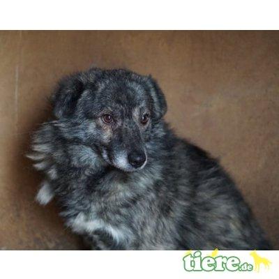 Leroy, Mischling - Rüde