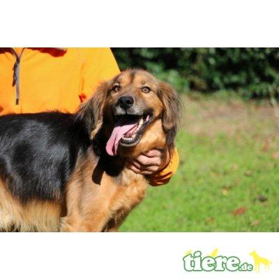 Lillo, : ein wunderbarer Hundefreund - Rüde 1