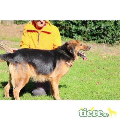 Lillo, : ein wunderbarer Hundefreund - Rüde