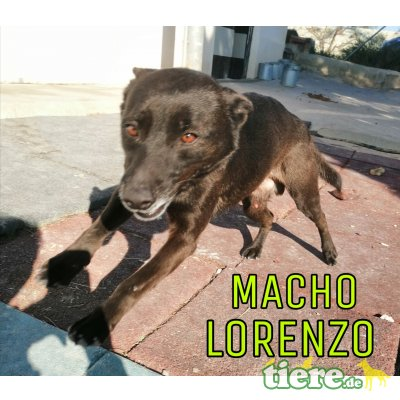 Lorenzo 2, Mischling - Rüde
