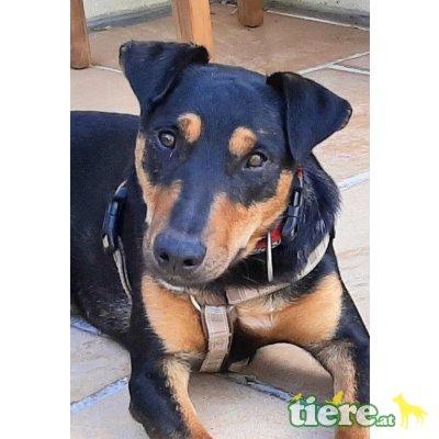 NEMO 3, Terriermix - Rüde