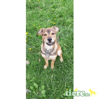 Nerko, Junger Schäferhund mix - Rüde 1