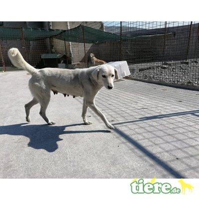Phia, wünscht sich ein tolles Hundeleben, Mischling - Hündin