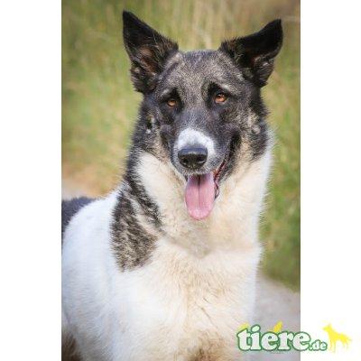 Pippo, ein besonderer Hund für besondere Menschen - Rüde