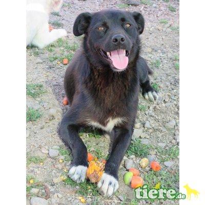 Rocky -kinderlieb,freundl,sozial,ausgegliche, hunde/katzenverträgl, Mischling - Rüde