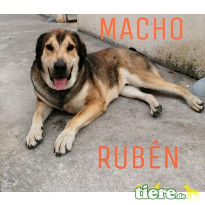 Ruben, Mischling - Rüde