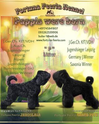Schwarzer Russischer Terrier Welpen - Rüde 1