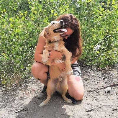 🌷🌷Sky ist verspielt, sanft mit Kindern und kommt gut mit anderen Haustieren und Menschen aus🐕🦺🐕🦺, Mischling Welpen - Rüde