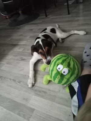 Snoopy, Mischling Welpen - Rüde 1