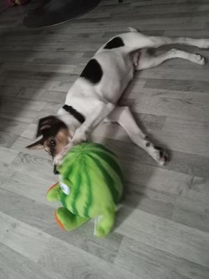 Snoopy, Mischling Welpen - Rüde