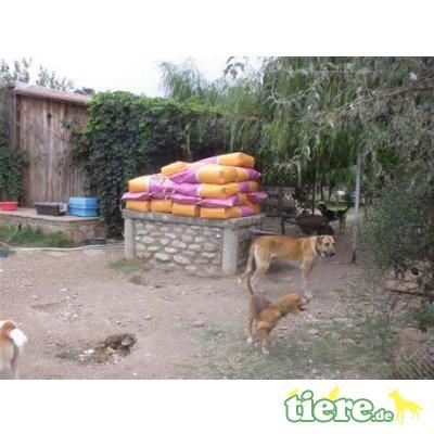 Suchen Hundefutter 1