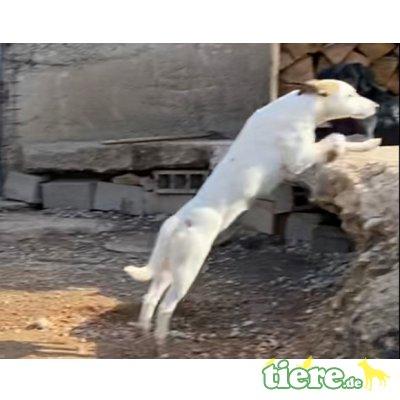 Susi, Susi sucht besondere Menschen, inkl Ersthund - Hündin