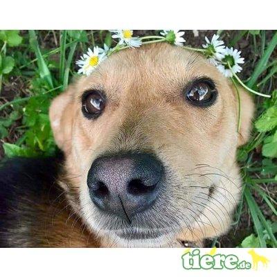 Tina, ist sehr menschenbezogen & lieb, Mischling - Hündin 1