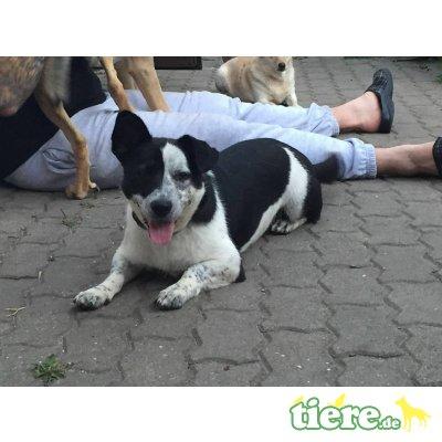 Toto Shelter, Mischling - Rüde