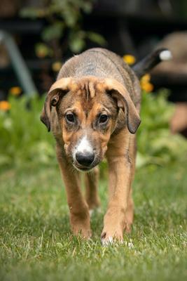 WORRICK Hundebub, Mischling - Rüde