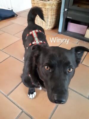 Winny, geb. 2019 sucht liebevolles Zuhause, Mischling - Rüde 1
