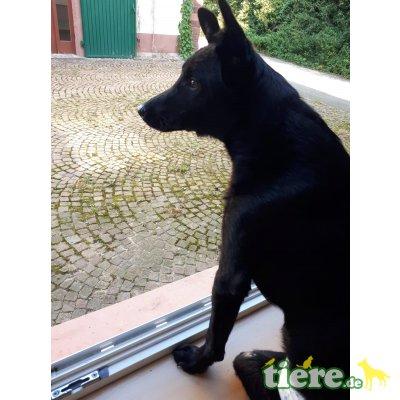 Zeus - kinderlieb,freundl,fröhl, hunde/katzenverträgl, Mischling - Rüde