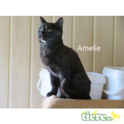 Amelie geb. 10/2019 sucht Zuhause - Katze