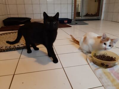 Andy und Sandy, Jungtier - Kater