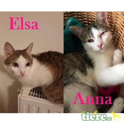Anna & Elsa, TSV SOS Katze - Katze