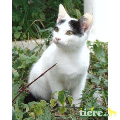 Athina, Mischling - Katze