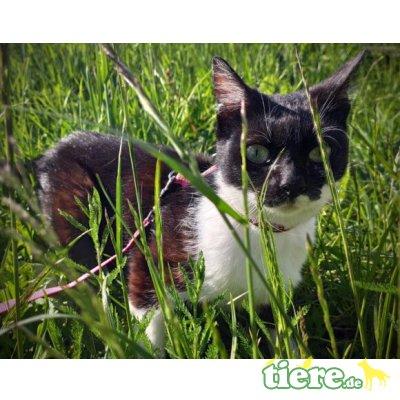 Becky, Mischling - Katze