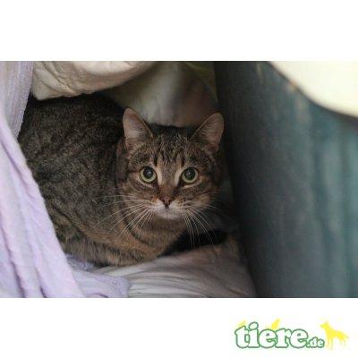 Belita, EKH - Katze