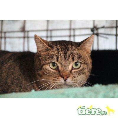 Belita, EKH - Katze 1