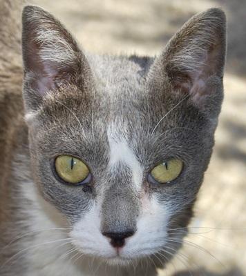 Camilla, - Katze