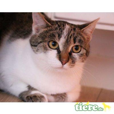 Cassy, Mischling - Katze 1