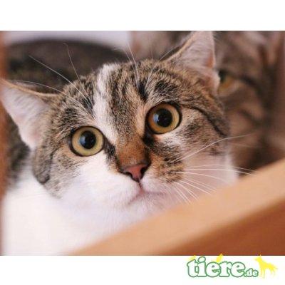 Cassy, Mischling - Katze