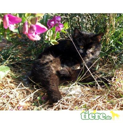 Chati - FIV positiv, sucht dringend ''ihre'' Menschen - Katze