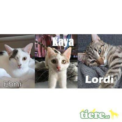 Ehni & Kaya & Lordi, TSV SOS Katze - Katze