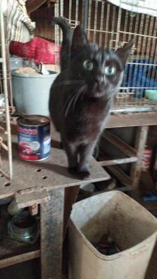 Emmy, Mischling - Katze