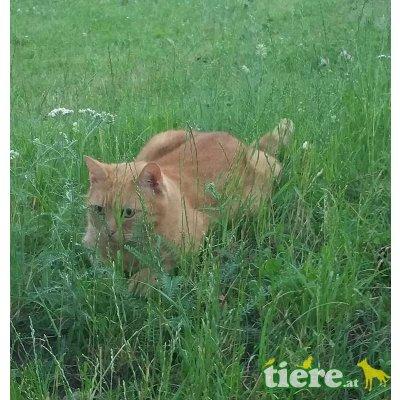 Evoly & Lia, TSV SOS Katze - Katze