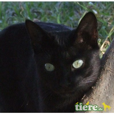 Felizian, schwarzer Mini Panther-sucht gemütliches Sofa - Kater